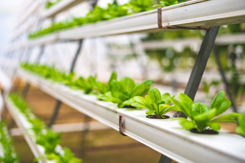 Green plants in hydroponics system